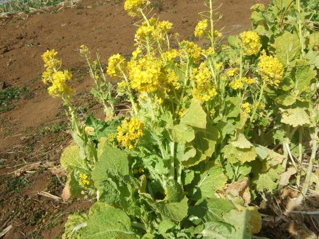 野菜畑に春の足音が.......寒い~寒い!_b0137932_18175878.jpg