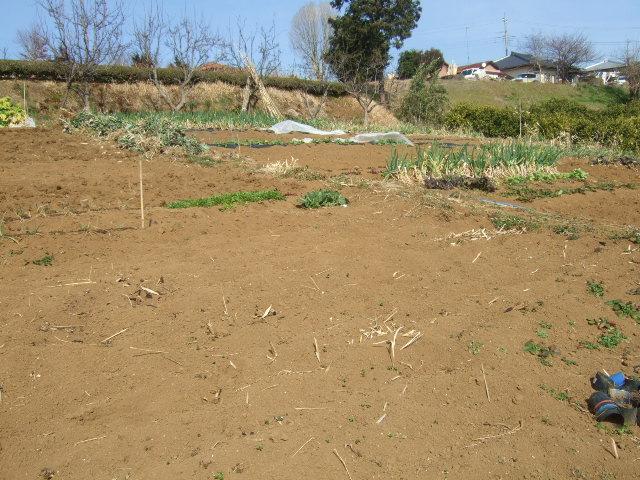 野菜畑に春の足音が.......寒い~寒い!_b0137932_18184894.jpg