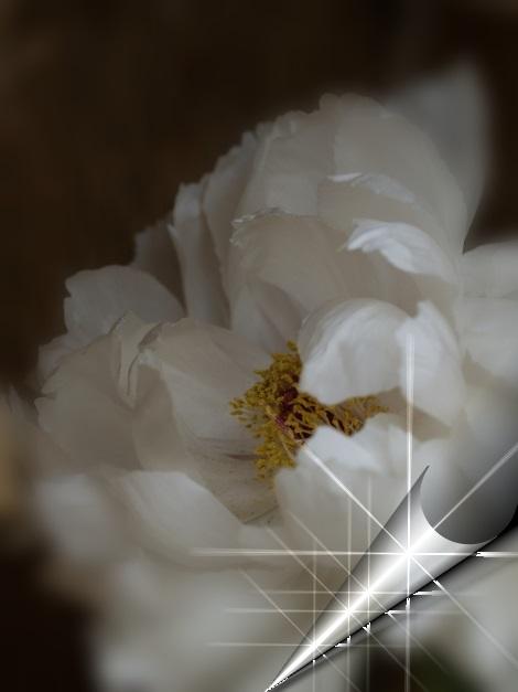 f0103534_22215478.jpg