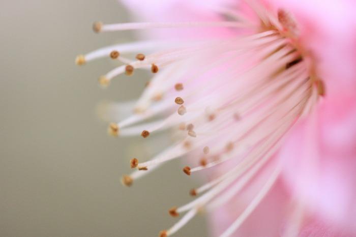 春を告げて・・・_a0122544_21535978.jpg