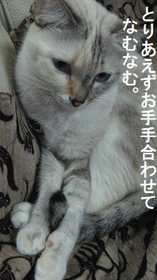 a0087146_1750586.jpg