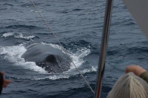 座間味のクジラ&水中の世界⑧_c0180460_063794.jpg