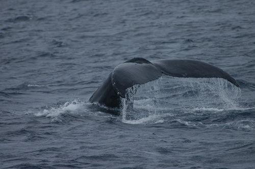座間味のクジラ&水中の世界⑧_c0180460_081960.jpg