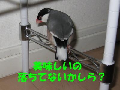 b0158061_19453866.jpg