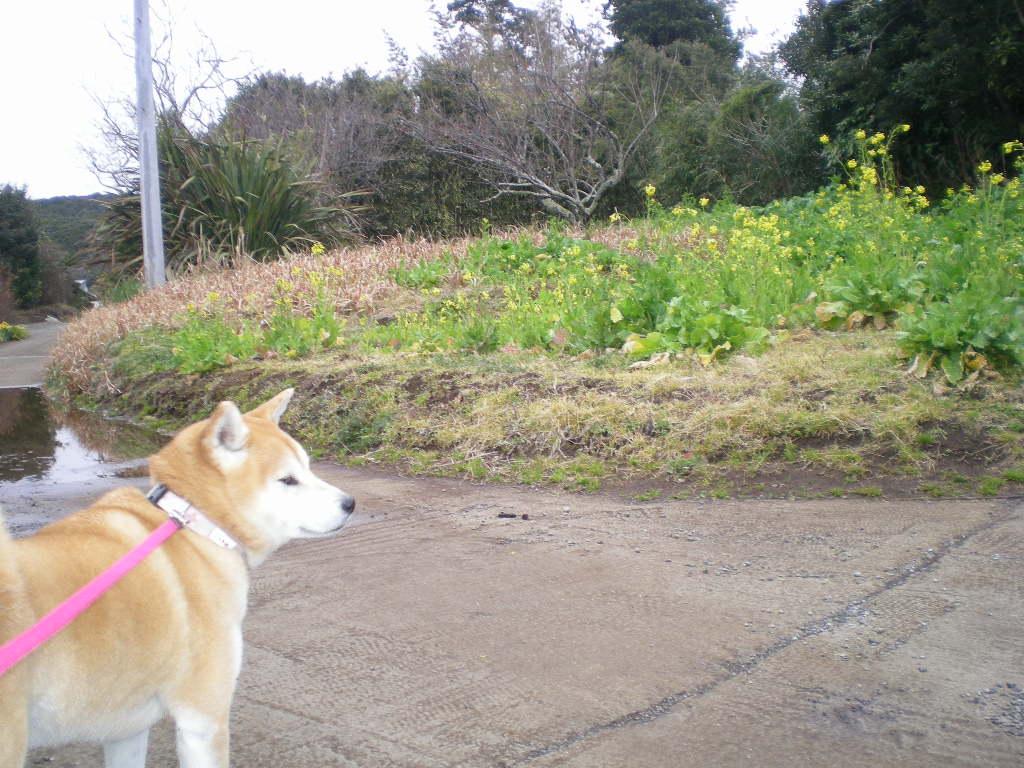 2010年2月12日(金)愛ちゃんは草食系!_f0060461_19105234.jpg