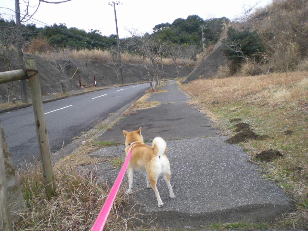 2010年2月12日(金)愛ちゃんは草食系!_f0060461_1954793.jpg