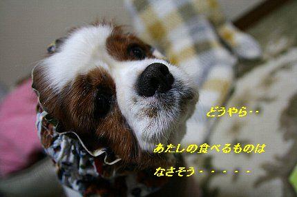 b0021297_21253135.jpg