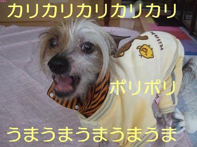 f0179203_849362.jpg