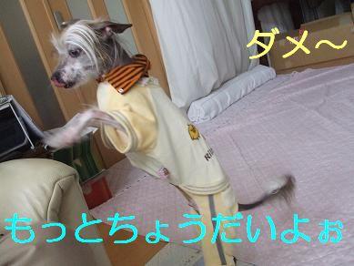 f0179203_8502981.jpg