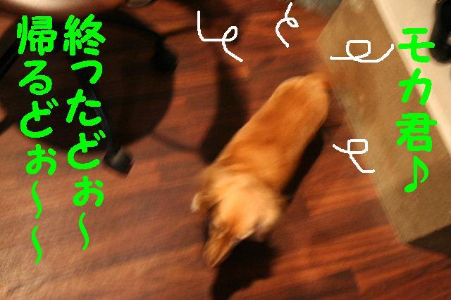 b0130018_2042338.jpg