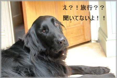 コロコロステーキ☆コチュジャンソース & ホリデーに行ってきま~す♪_d0104926_4261974.jpg