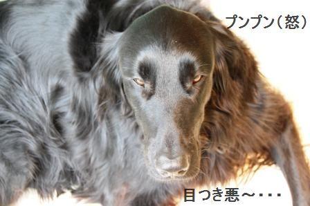 コロコロステーキ☆コチュジャンソース & ホリデーに行ってきま~す♪_d0104926_426494.jpg