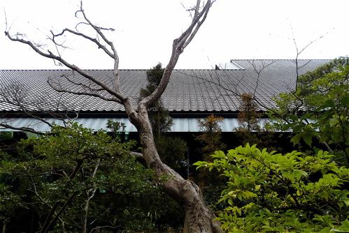 根津美術館を見てきました。_f0165030_1133599.jpg
