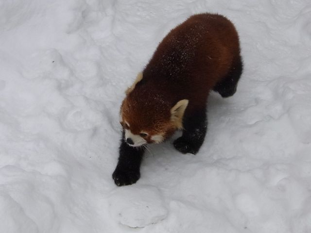 旭山動物園_f0209434_18595182.jpg