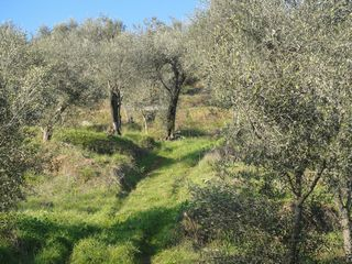 イタリアへ オリーブオイルの旅 - ①_e0134337_1002215.jpg