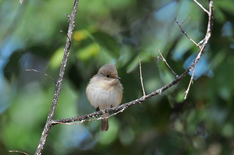 2月13日(晴れ時々くもり)タイトル:日本最小の鳥_f0105542_16142110.jpg