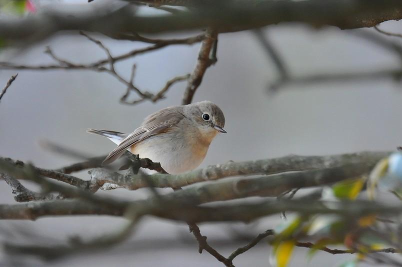 2月13日(晴れ時々くもり)タイトル:日本最小の鳥_f0105542_1614401.jpg