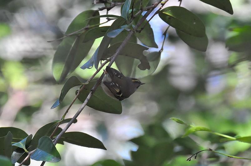 2月13日(晴れ時々くもり)タイトル:日本最小の鳥_f0105542_1653521.jpg