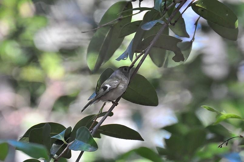 2月13日(晴れ時々くもり)タイトル:日本最小の鳥_f0105542_16555.jpg