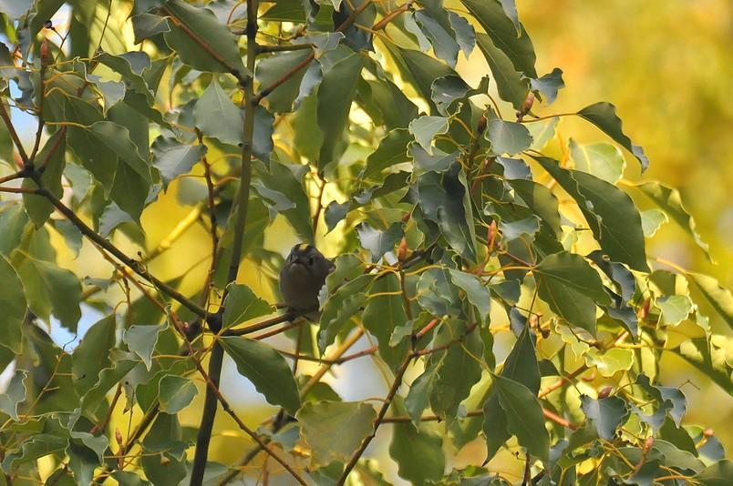 2月13日(晴れ時々くもり)タイトル:日本最小の鳥_f0105542_1655861.jpg