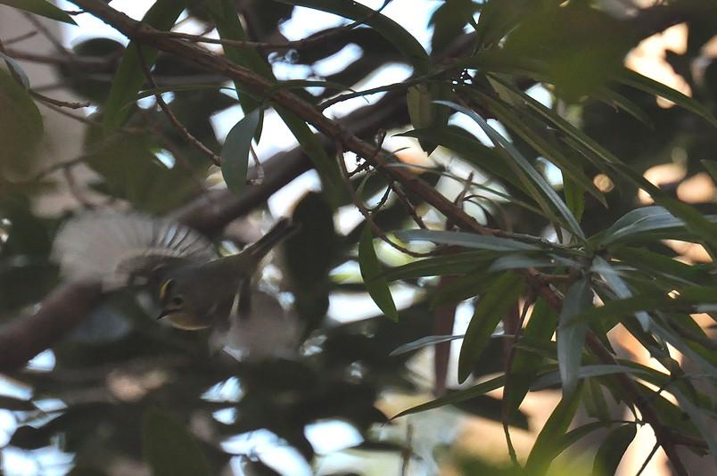 2月13日(晴れ時々くもり)タイトル:日本最小の鳥_f0105542_1662770.jpg