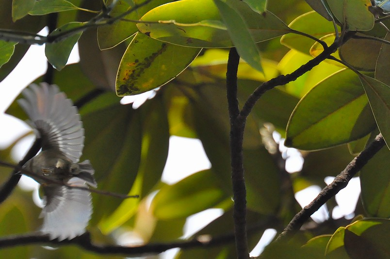 2月13日(晴れ時々くもり)タイトル:日本最小の鳥_f0105542_1665465.jpg