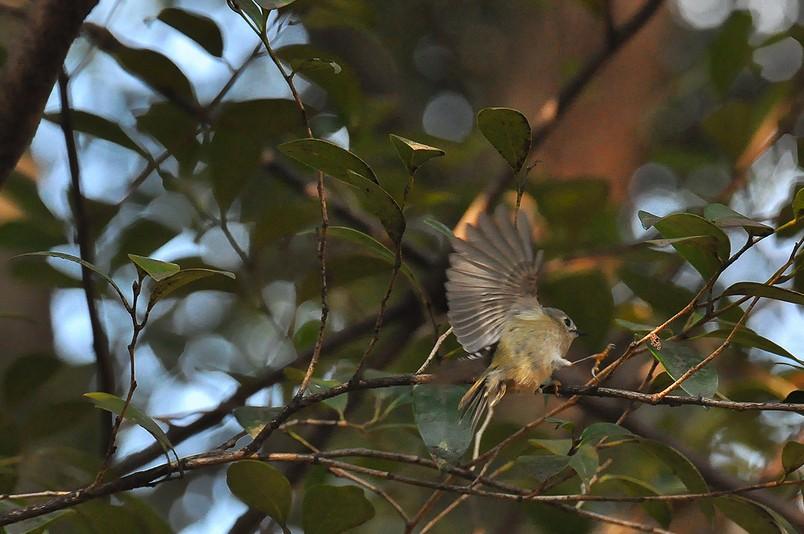 2月13日(晴れ時々くもり)タイトル:日本最小の鳥_f0105542_1672412.jpg