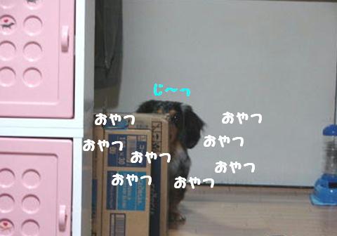 f0195891_1822874.jpg