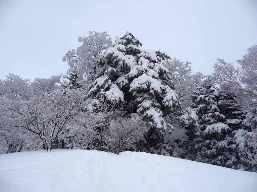 姫見平の樹々_c0223095_14131121.jpg
