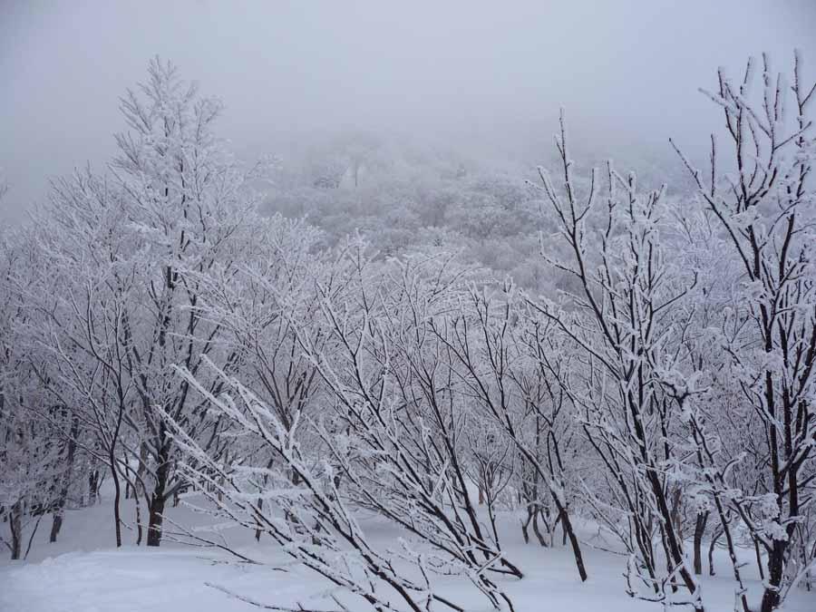 姫見平の樹々_c0223095_14132683.jpg