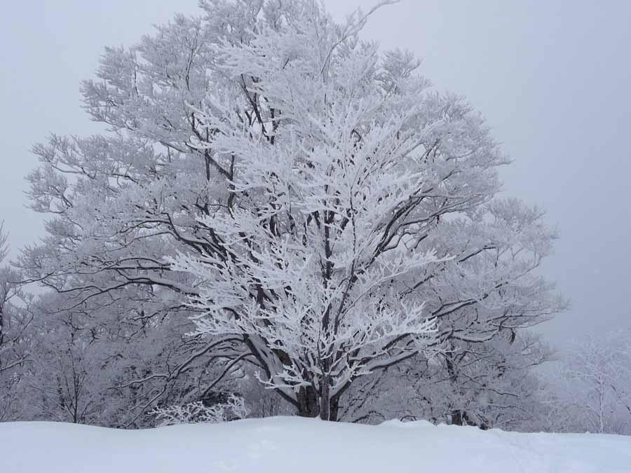 姫見平の樹々_c0223095_14134122.jpg