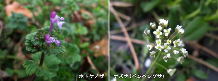 f0137096_1675377.jpg
