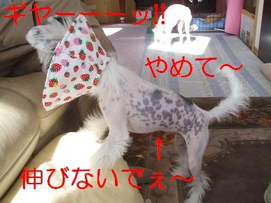 f0179203_12591553.jpg