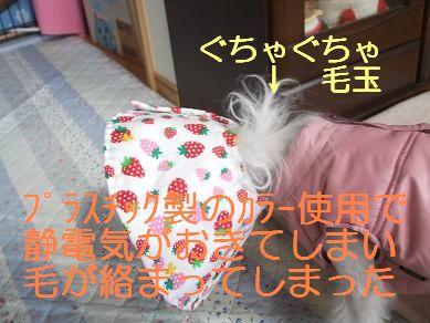 f0179203_1259555.jpg