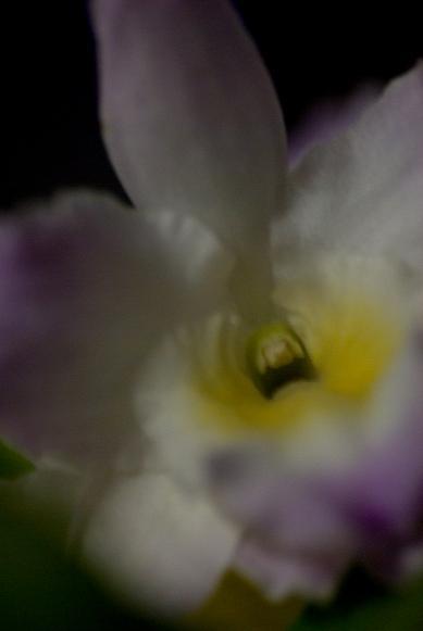 Dendrobium #1_f0155808_8533299.jpg