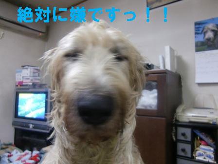 f0176830_19514668.jpg