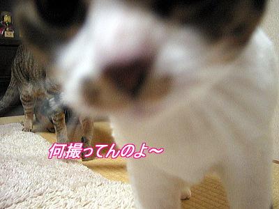 b0097848_9382084.jpg