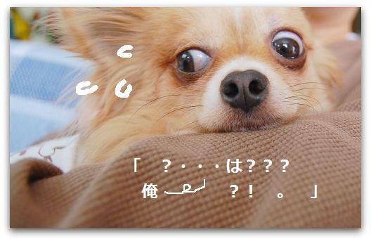 b0112758_16385295.jpg