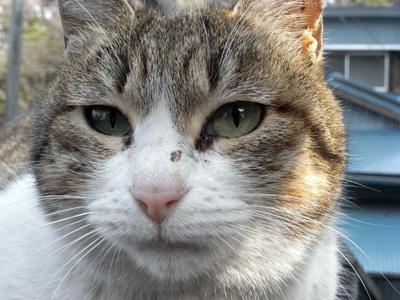 横浜山手の猫たち 「猫・ねこ写真展」 4日目 Art Gallery 山手_f0117059_20441135.jpg