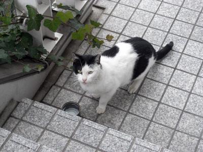 横浜山手の猫たち 「猫・ねこ写真展」 4日目 Art Gallery 山手_f0117059_20445734.jpg