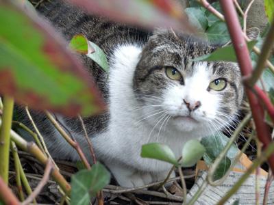 横浜山手の猫たち 「猫・ねこ写真展」 4日目 Art Gallery 山手_f0117059_20454298.jpg