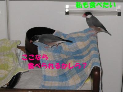 b0158061_2091815.jpg