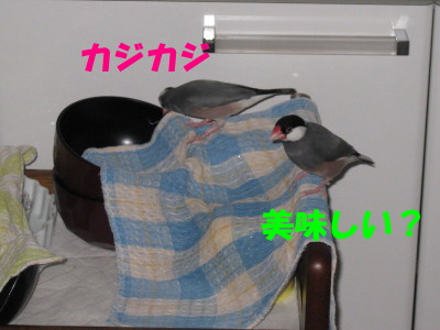 b0158061_209627.jpg