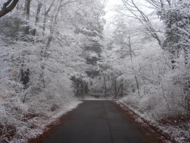 ひと時の雪の造形