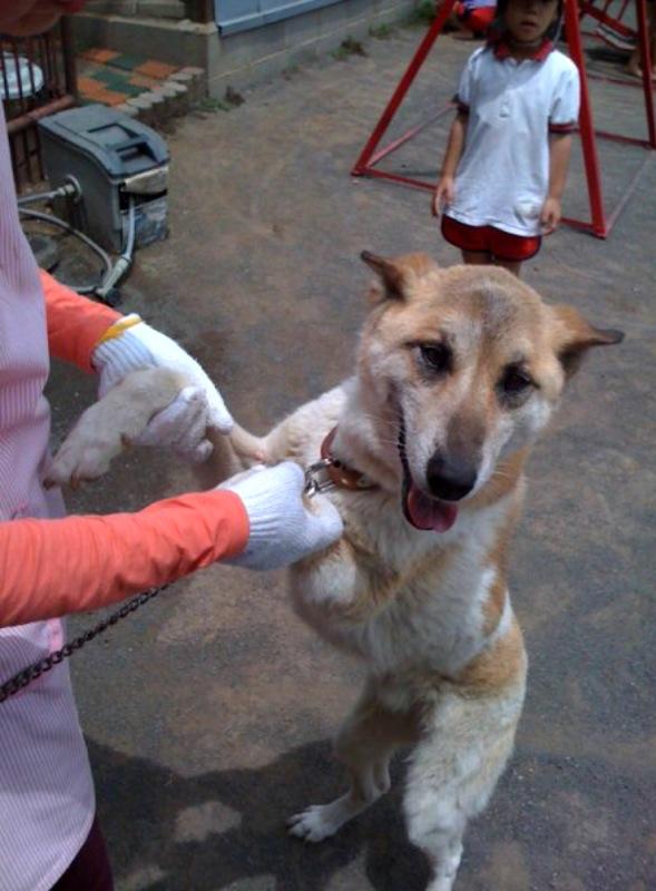愛犬ガチャピン、ありがとう。_b0188106_1854272.jpg