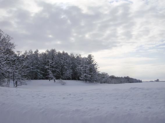 西高の雪像_f0160407_628987.jpg