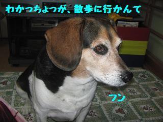 d0104209_20123871.jpg