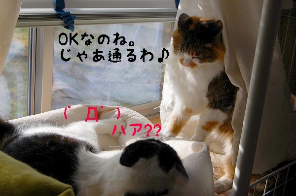 c0181639_0291922.jpg