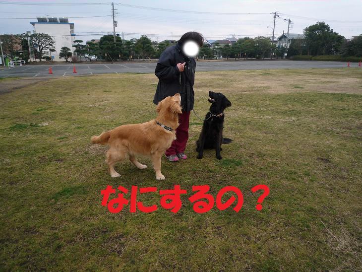 a0104464_1527165.jpg