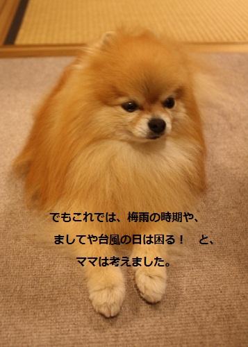 b0182968_143313.jpg
